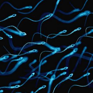 Andreia Trigo - Improving Sperm Quality