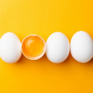 Andreia Trigo - Egg Collection